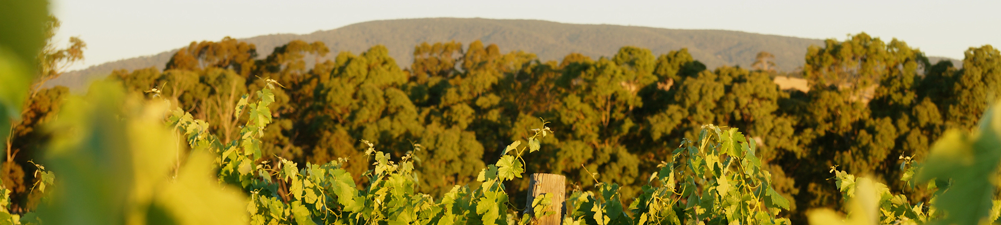 About Ned's Vineyard | Shiraz | Pyrenees | Yarra Valley wines
